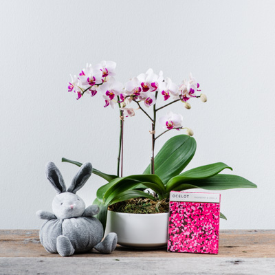Flower Addict - Baby Bundle